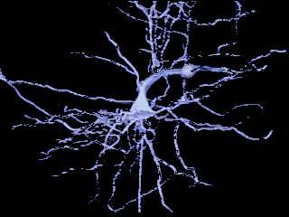 neuron1.jpg